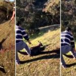 Man arrested in Melbourne after 'abhorrent' kangaroo killing