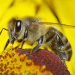The Importance of Protecting Pollinating Bees from Pesticides