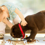 The 20 Best Dogs for Kids and Families