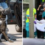 Police Dog Killed With An Axe By Man Shouting 'allahu Akbar' In Scheidam