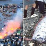 Japan on earthquake and tsunami alert after HUGE deep-sea fish found alive by fishermen