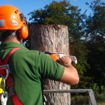 What Practices Are Being Performed By Certified Tree Surgeons?