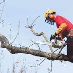 Absolute Guide To Hire The Best Tree Surgeons In Essex