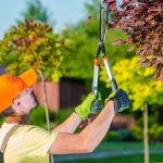 When Do You Need To Take Help From The Tree Surgeons