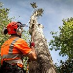 What Should Be Noticed In Tree Surgeons