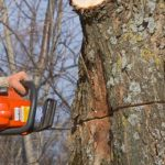 Tips To Select The Right Tree Surgeon