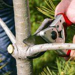5 BENEFITS OF HIRING A PROFESSIONAL TREE SURGEON