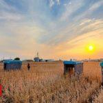 Alphabet Mineral reveals crop-inspecting robots