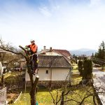 Guidelines For Choosing The Best Tree Surgeon