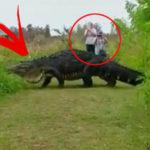 Gigantic 'dinosaur' Alligator Gives Tourists A Ghastly Surprise In Florida Park