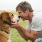 Universal Pictures cancels premiere of 'A Dog's Purpose'