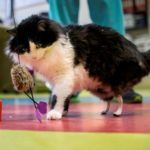 Paw-fect rescue: Bulgarian stray cats get bionic legs