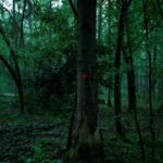 The tragic beauty of Europe vanishing forest