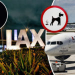 Man Gets Revenge On Woman Who Did Not Clean Up After Her Dog Pooed In Middle Of Airport