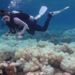 Great Barrier Reef: Two-thirds damaged in 'unprecedented' bleaching – BBC News