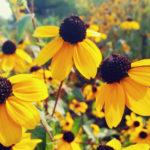 15 Summer Flowers for the Prettiest Garden Ever