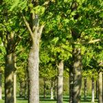 Tree Surgeons Orpington