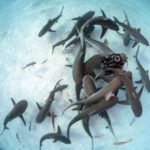 Blue Planet star shares extraordinary bond with sharks that DANCE for her